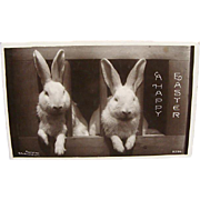 1909 Real Photo Easter Postcard Of Two White Bunny Rabbits