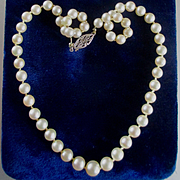 SOLD Cultured Graduated  Pearls Choker Gold Filgree Clasp Original Velvet Box