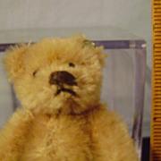 Vintage Three Inch Steiff Bear