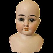 Stunning Antique Bisque Shoulder Doll Head