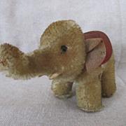 1955 Tiny Steiff Elephant - 75th Anniversary Edition - So Darling