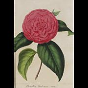 SALE Vera Italian Camellia