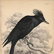 Jardine Black Water-Chat Print