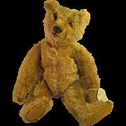 "C 1904 / 1905   ~ ANTIQUE STEIFF 12"" TEDDY BEAR ~   With Blank Button in Ear"