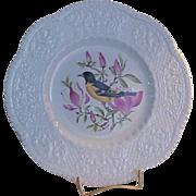 SALE Royal Cauldon Aviary Baltimore Oriole Luncheon Plate