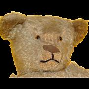 """Very Fine Steiff 20"""" Teddy Bear"""