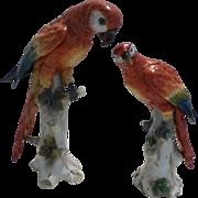 Scarlet Macaws Porcelain  Figures