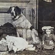 SALE PENDING 1902 Stereoview Photo, St. Bernard Sits Watch Over Sleeping Child & Jumeau Doll