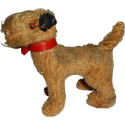 Cute Little Airedale Terrier Dog