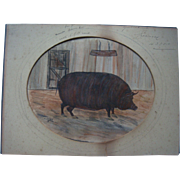 19th century naive watercolour of prized pig