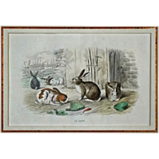 French Color Engraving Rabbits Le Lapin Édouard TRAVIES del,  Beyer sculpt - 19th Century, Fr
