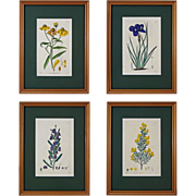 Set of 4 English Botanical Engravings Hand Colored, Matted and Framed- 19th Century, England