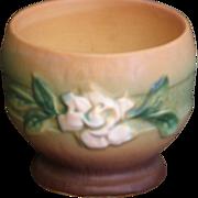 Roseville white Rose