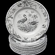 SALE Ten INDUS Aesthetic Movement EXOTIC BIRDS Transferware Plates ~ 1885