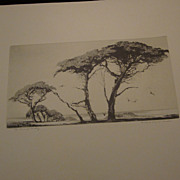"Mildred Bryant Brooks Etching, ""The Pines of Monterey"""