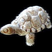 "Wade Porcelain Turtle Trinket Box, 4"""