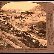 Stereo View of Sheep Ranch in Idaho