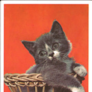 Postcard of Grey Kitten in a Basket