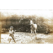 SALE Real Photo Postcard Boy Pulling Horse