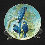 SOLD Limited Edition Wedgwood Hyacinth Macaw Plate