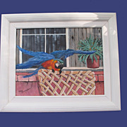 SOLD Blue and Gold Macaw Original Framed Oil Painting