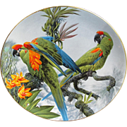 Wedgwood Red-fronted Macaws Plate from England