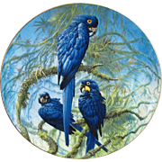 SOLD Wedgwood Hyacinth Macaw Plate from England