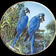 Wedgwood Fragile Paradise Lears Macaws Plate
