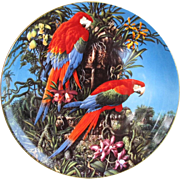 Wedgwood Green-wing Macaws Plate from England