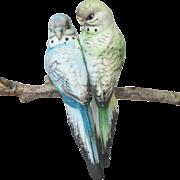 SOLD Clip On Parakeet Pair