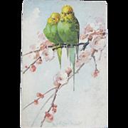 Catherine Klein Budgie Parakeet Postcard