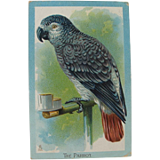 SOLD Tuck's African Grey Postcard