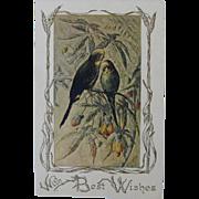 Antique Budgie Christmas Postcard
