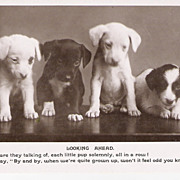 """Puppies"" - Real Photo"