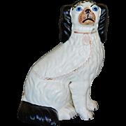 C1860 Antique Blue Eyed Disraeli Staffordshire Dog