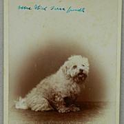 SALE Antique Cabinet Dog Photograph