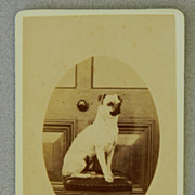 SOLD Antique Cartes-De-Visites Pug Dog Photograph