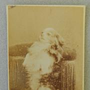 SALE Antique Cartes-De-Visites Dog Photograph