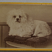 SALE French Cabinet Photograph Recumbent Dog