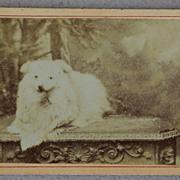 SALE Cartes-De-Visites Dog Photograph