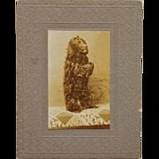 SALE Antique Photograph Begging Dog