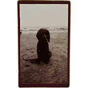 SALE French CDV Dog Photograph - Poodle On The Beach
