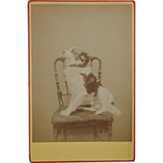 SALE Cabinet Photograph ~ Posing Dog #2
