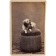 SALE Antique CDV Photograph ~ Lovely Dog