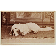 SOLD Antique CDV Photograph ~ Sleeping Dog