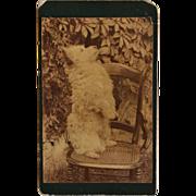 SALE Antique CDV Photograph ~ Begging Spitz Dog