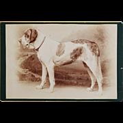 """SOLD Antique Cabinet Photograph ~ Huge Dog Named """"Wanda"""""""