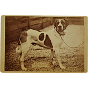 SOLD Antique Cabinet Photograph ~ Saint Bernard Dog C1886