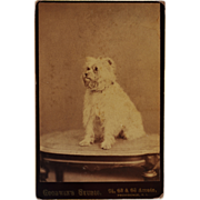 SALE Cabinet Photograph ~ Adorable Terrier Dog