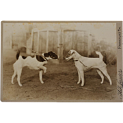SALE PENDING Antique Cabinet Photograph ~ Pair Of Terrier Dogs